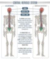wellness chiropractic health center