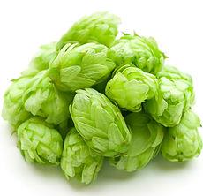 Wet hops_61380604 (1).jpg