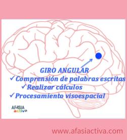 El giro angular: su implicación en el lenguaje y las matemáticas