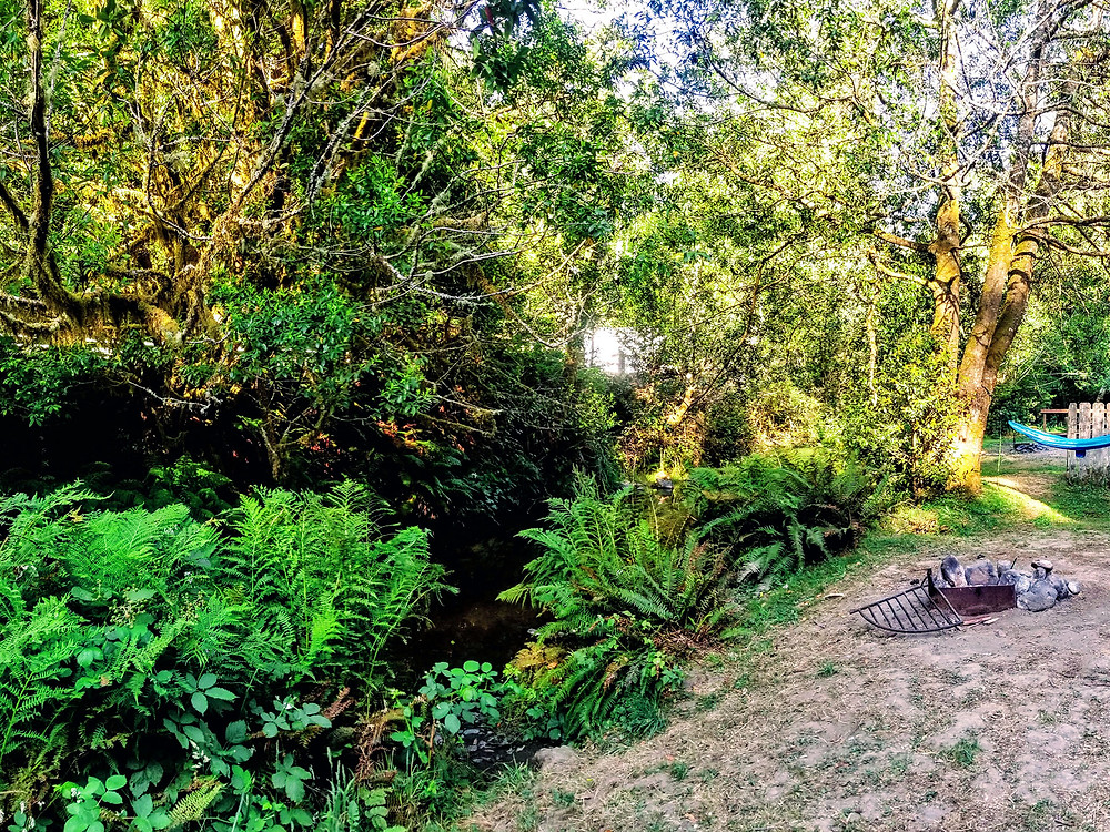 Campsite at Indian Creek Campground in Gold Beach, OR