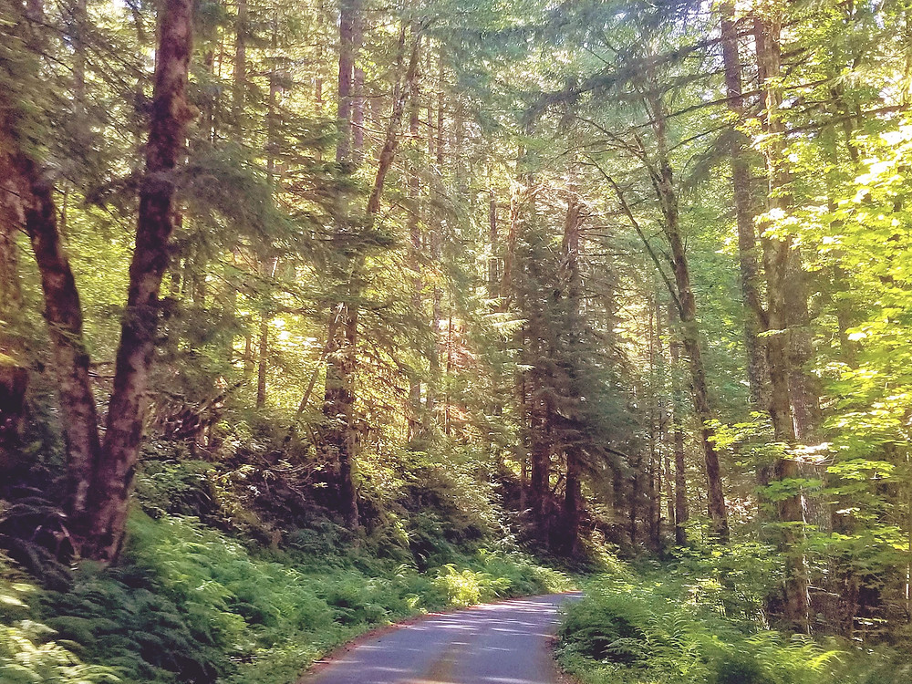Forest Road 520, Detroit, Oregon