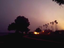 Silent Beauty of a Foggy Night