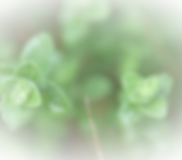 Green%2520Leaves%2520_edited_edited.png