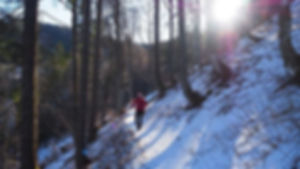Wanderung Feldberg | Zastler Hütte