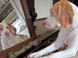 WHAT A DOG SEES IN A MIRROR