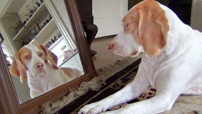 What a dog sees in a mirror...