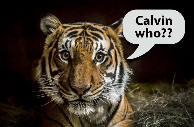 Does Liking Calvin Klein's Obsession Make You a Tiger in Bed?