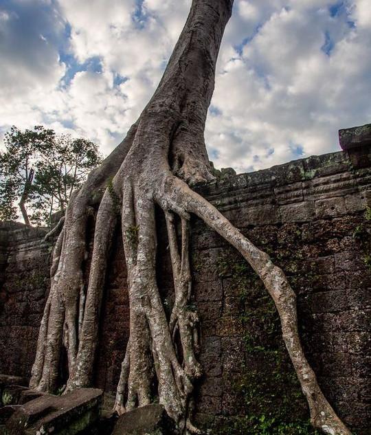 Trees growing through ruins