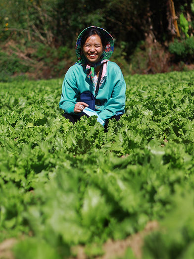 Myanmar Farming 2.jpg