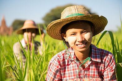 Myamar farming 2.jpg