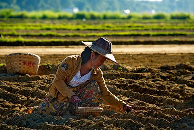 Myanmar Farming.jpg