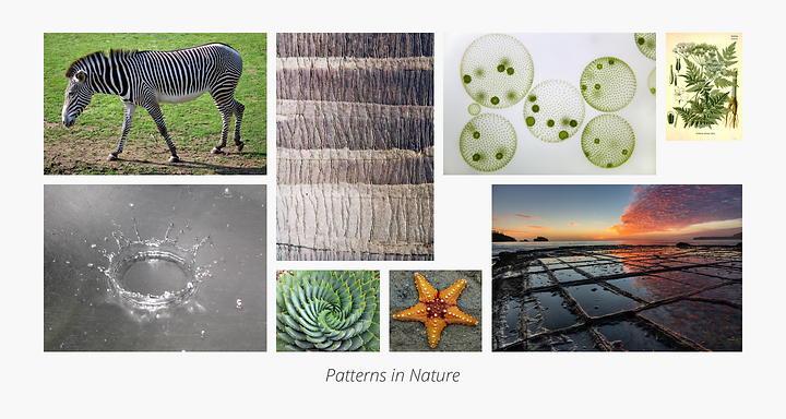 01_PatternInNature.png