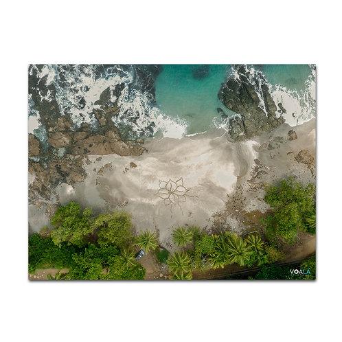 Quadro Praia e Flor - Costa Rica