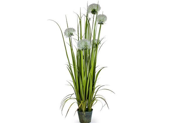 Elegant Ornamental Grass In Galvanised Pot