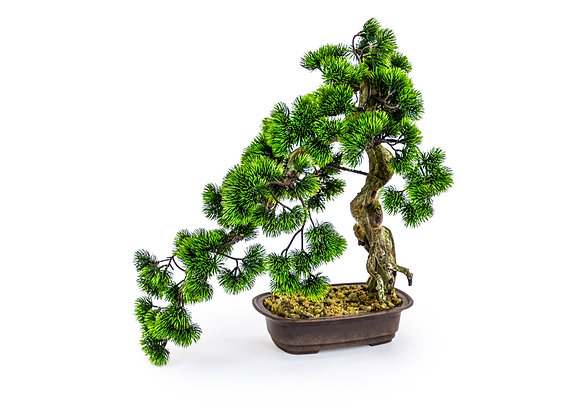 Large Ornamental Bonsai Tree in Iron Pot