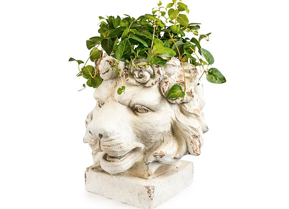 Quirky Stone Effect Rustic Lion Planter