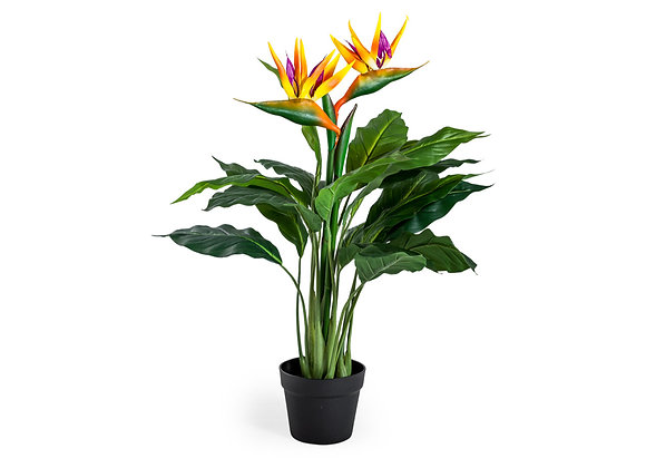 Ornamental Potted Bird of Paradise Plant