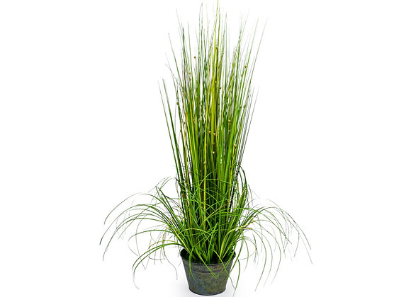Ornamental Grass In Galvanised Pot