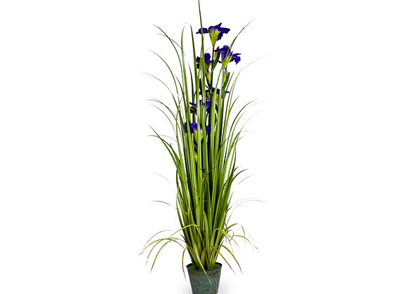 Ornamental Grass With Purple Flowers In Galvanised Pot
