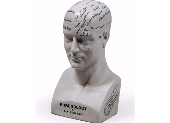 Quirky Large Ceramic Phrenology Head