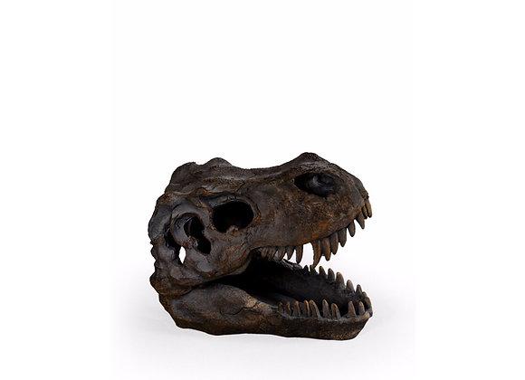 Small T Rex Dinosaur Skull Head Decoration