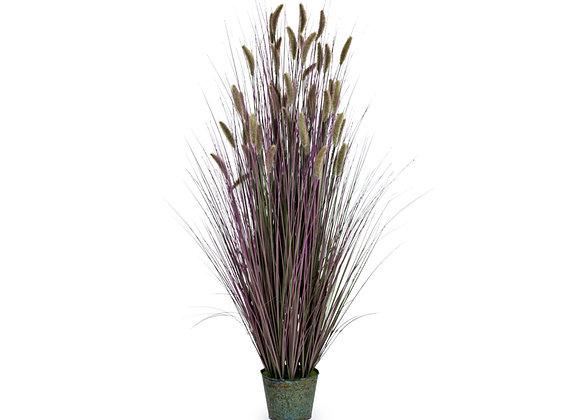 Purple Ornamental Grass In Galvanised Pot