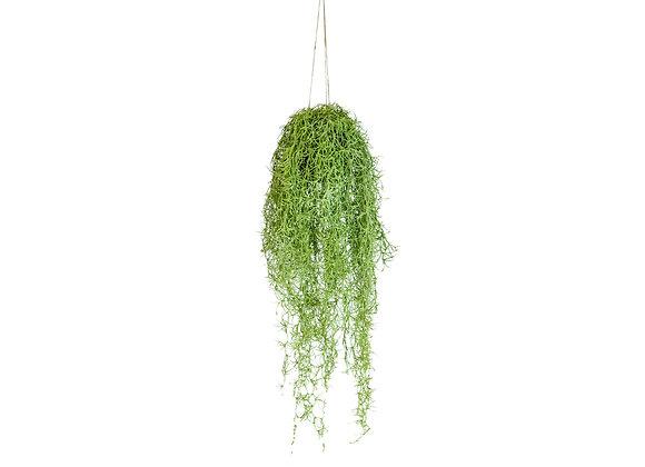 Ornamental Hanging Airplant Vine Arrangement