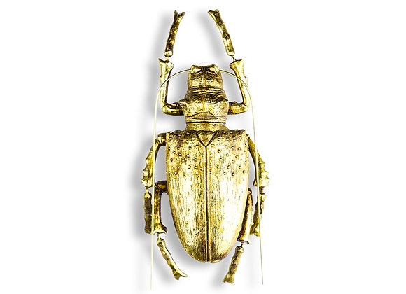 Quirky Gold Beetle Wall Decoration