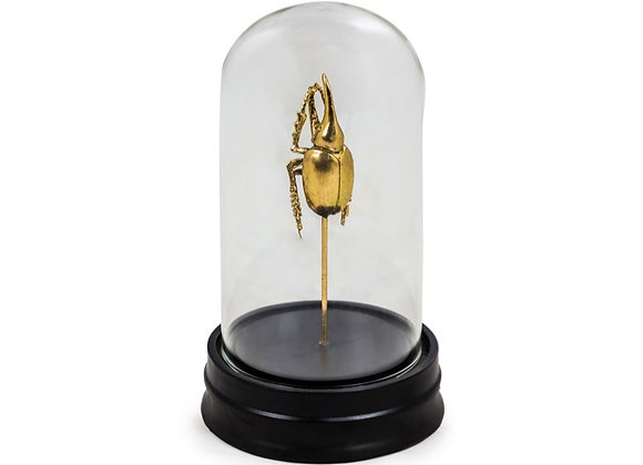 Quirky Gold Beetle In Specimen Jar