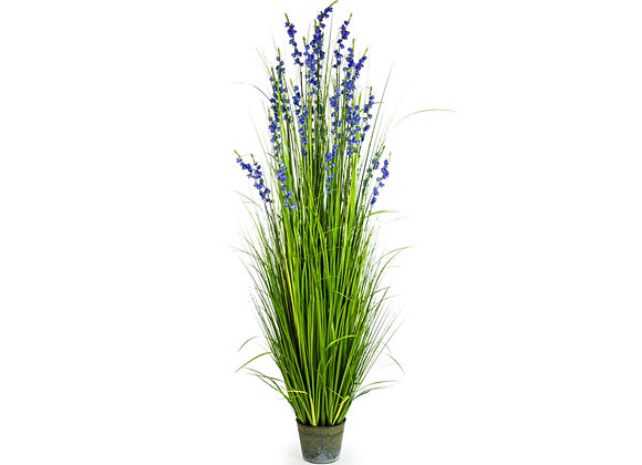Ornamental Grass With Small Purple Flowers In Galvanised Pot