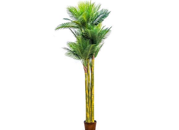 Ornamental Extra Large Palm Tree in Black Pot