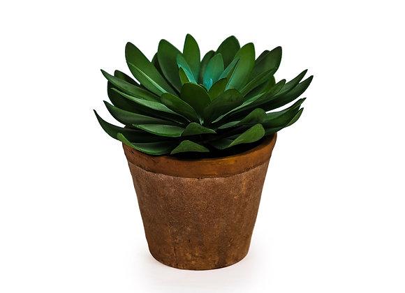 Dark Green Ornamental Succulent in Terracotta Pot