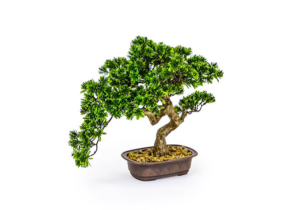 Ornamental Bonsai Tree in Iron Pot