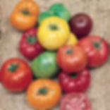 arc en ciel de tomates.jpg