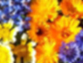 fleurs%20com_edited.jpg