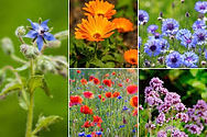 fleurs du jardin2.jpg