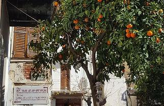 orange treees_edited.jpg