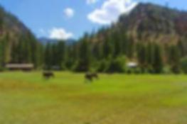 taylor ranch2.jpg