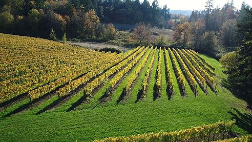 Oswego Hills Vineyard.jpg