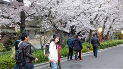 17_0409-02_hanami_ (6)