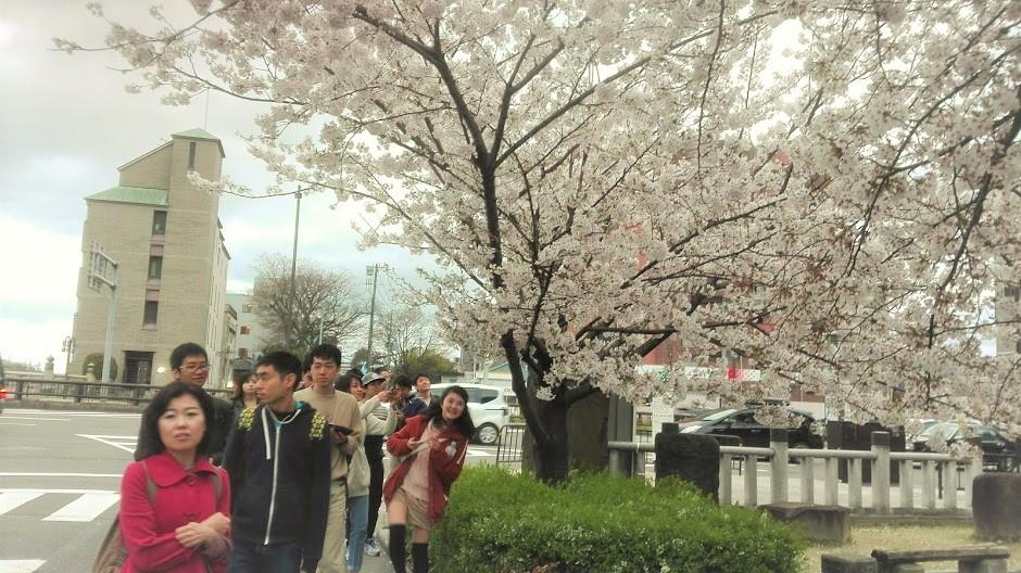 17_0409-02_hanami_ (3)
