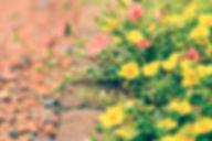 flowers-1750280_1280.jpg