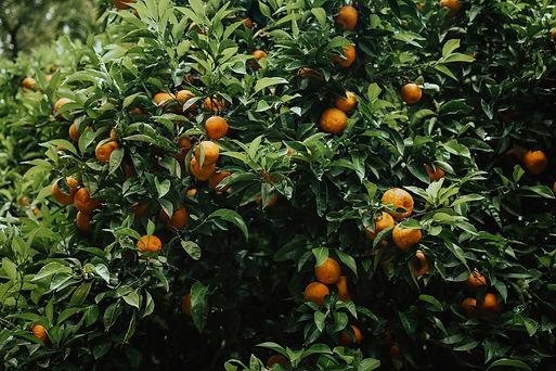 orange%20fruit_edited.jpg