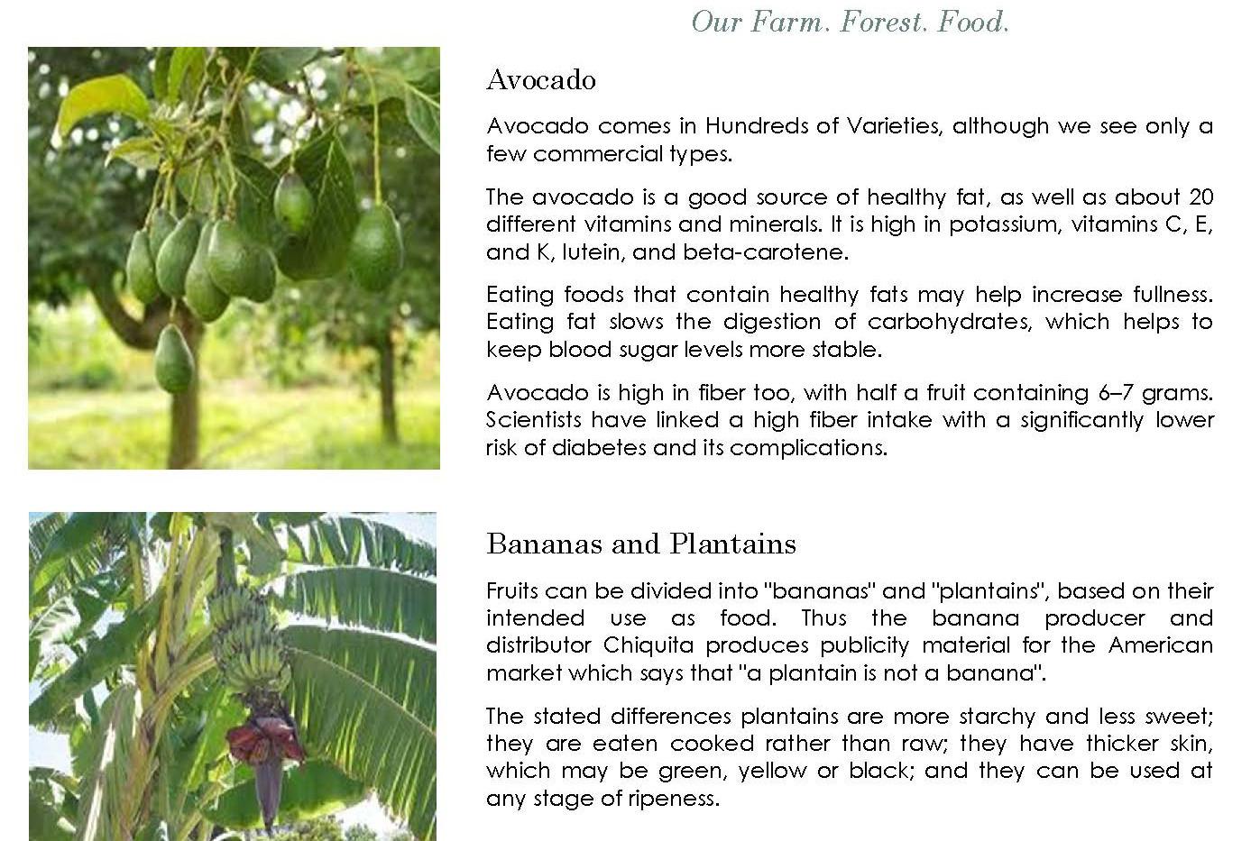 ALFFi Vision Plan_Page_14.jpg
