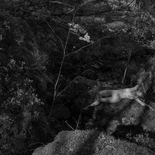 Woodland Nude