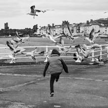 Scaring The Gulls