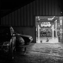 Garage Dog