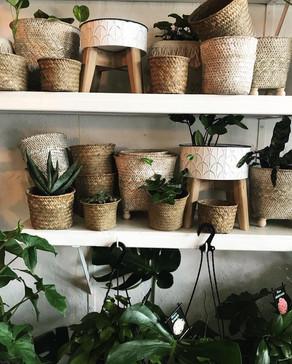 Designer Pots