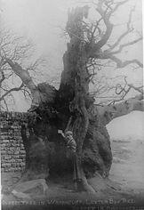 Letter box tree.jpg