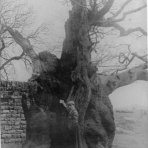 Letter Box Tree